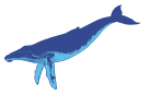 humpbacked whale